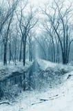 多雪的流森林 免版税库存照片