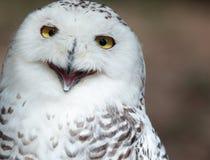 多雪的猫头鹰 图库摄影