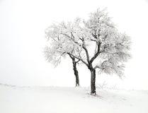 多雪的结构树二 免版税库存照片