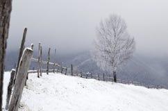 多雪的结构树 在Carpatian山的冬天风景 免版税库存照片