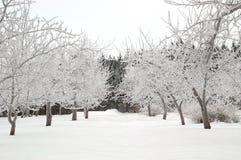 多雪的胡同 免版税图库摄影