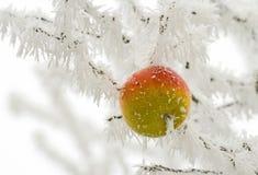 多雪的苹果 图库摄影