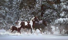 多雪的赛跑者 图库摄影