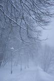多雪的路在冬天公园 免版税库存照片