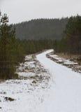 多雪的路径 雪风暴 库存图片