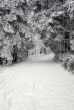 多雪的路径 免版税库存照片