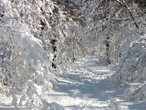 多雪的路径 免版税库存图片