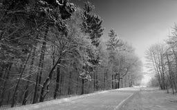 多雪的路 库存照片