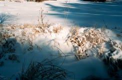 多雪详细资料的横向 库存照片