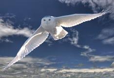 多雪飞行的猫头鹰 库存图片