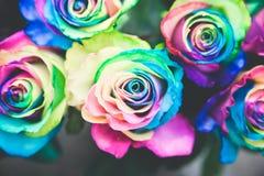 多颜色玫瑰 库存图片