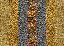 多香果和辣椒红色白色和绿色条纹垂直的莳萝种子烘干和香菜基地集合香料背景n混合物  免版税库存照片