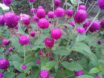 更多紫色花 免版税库存图片