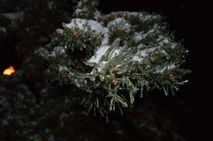 夜与雪和冰柱的圣诞树分支 免版税库存图片