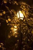 夜光 库存图片