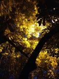 夜光 图库摄影