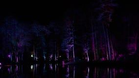 夜公园,照亮由装饰光源 发光的树干在水中被反射 股票视频