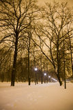 夜在公园 免版税库存图片