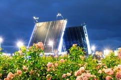 夜在前景开花的玫瑰和明亮的光圣彼德堡的宫殿桥梁 库存照片