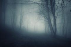夜在有蓝色雾的一个黑暗的森林里在秋天 免版税库存照片