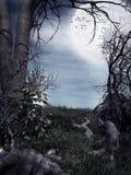 夜在森林里 库存图片