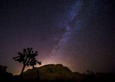 夜在约书亚树国家公园 免版税库存图片