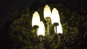 夜在绿色树前面的柱子光 影视素材