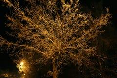 夜射击 在黄色街灯点燃的雪的一棵树 免版税库存照片