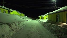 夜庆祝流浪狗黑白颜色清除了从街道的雪在有黄色转移阵营的房子之间 股票录像