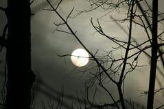 夜月亮在有薄雾的黑暗的森林里 库存照片