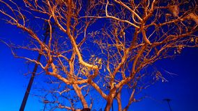 夜树 免版税库存照片