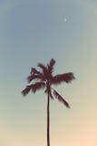 夜棕榈 免版税图库摄影
