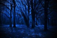 夜森林 免版税库存照片