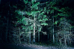 夜森林 库存照片