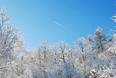 夜的寒冷结冰的森林 免版税图库摄影