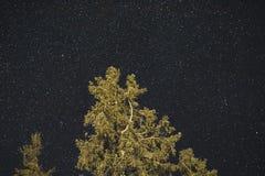 夜空和树 免版税库存图片