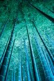 夜竹森林Shoren在寺庙是神奇和沈默的 免版税库存照片