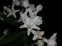 夜自然 图库摄影