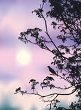 夜莺歌曲 库存图片