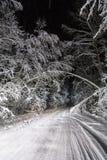 夜路在冬天森林里 库存图片