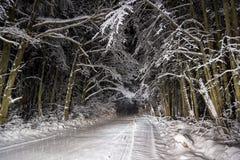 夜路在冬天森林里 免版税库存照片