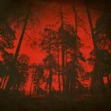 夜邪恶的木背景 图库摄影