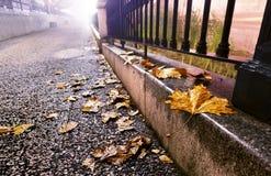 夜都市风景在秋天 免版税库存照片