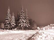 夜间冬天 免版税库存图片
