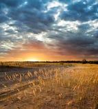 夜间干草原 库存照片