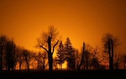 夜间平静公园的日落 免版税库存图片