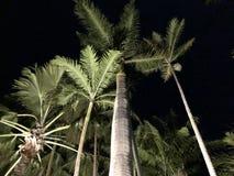 夜间棕榈树 免版税库存图片