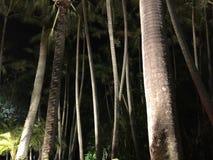 夜间棕榈树 免版税库存照片