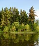 夜间森林湖 免版税库存照片
