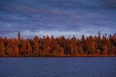 夜间森林 库存图片